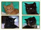 Фото в Кошки и котята Продажа кошек и котят Питомник предлагает к продаже котят породы в Абзаково 40000