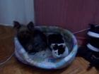 Свежее изображение Отдам даром - приму в дар Отдам в хорошии руки котенка и щенка 68255156 в Азове