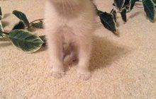 в добрые руки красивых котят- 2 месяцев