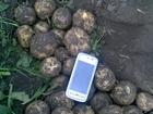 Смотреть изображение Разное Картофель оптом от производителя 36658269 в Барнауле