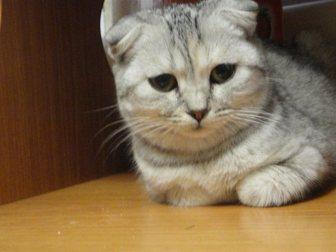 Новое фотографию  пропала кошка 33340601 в Барнауле