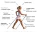 Изображение в   Скандинавская ходьба – это ходьба с палками, в Барнауле 1200