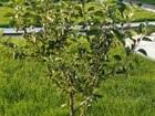 Смотреть изображение Разное Посадка сада в Белгороде на вашем участке, 68637706 в Белгороде