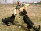 Фото в   Дрессировка собак всех пород, постановка в Белореченске 123
