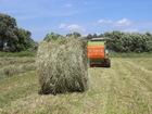 Фото в Прочее,  разное Разное Сено свежее луговое, разнотравье, тюки по в Березовском 250