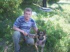 Изображение в Собаки и щенки Вязка собак Здоровый, активный 3 годовалый ещё без вязки в Брянске 0