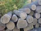 Смотреть фото Строительные материалы Закупаем (Покупаем) кругляк дуба 69151345 в Брянске
