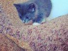 Скачать фотографию Отдам даром отдам в хорошие руки котят)* 32984050 в Бузулуке
