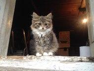Котята, Девочки, Хорошенкие ждут своих хозяев Четыре пушистых котёнка (девочки)