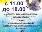 Изображение в Кошки и котята Выставки кошек Уважаемые питомники и заводчики кошек! Владельцы в Долгопрудном 100