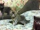 Скачать бесплатно изображение Отдам даром отдадим котят в добрые (!) руки 37369103 в Донецке