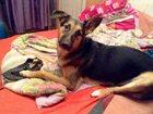 Скачать фото Найденные Ищу свою собаку, Помогите найти люди! 32297874 в Екатеринбурге