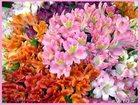 Фото в Домашние животные Растения С частного приусадебного хозяйства продается в Арамиле 0