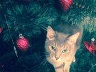 Просмотреть фото  Потерялся кот 33550598 в Екатеринбурге