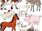Увидеть foto  Куплю любой вид скота свиней овец коров лошадей И Т Д 34464820 в Шали