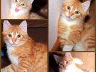 Фото в   Отдам рыжего котенка 3 месяца от домашней в Екатеринбурге 0