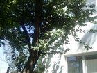 Скачать фото  обмен краснодарский край на екатеринбург 34575380 в Екатеринбурге