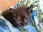 Фото в Отдам даром - Приму в дар Отдам даром Отдам котят в любящий дом. 2 месяца. в Екатеринбурге 0