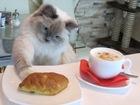 Фото в Кошки и котята Продажа кошек и котят В связи с изменением племянной программы в Екатеринбурге 35000