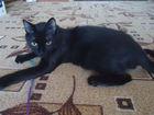 Фото в Кошки и котята Продажа кошек и котят Мася, скорее всего, когда-то была домашней… в Екатеринбурге 0