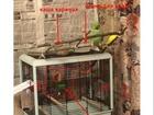 Фото в Домашние животные Птички Мальчик, 1год 3 месяца, при регулярных занятиях в Екатеринбурге 5000