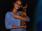 Фотография в Собаки и щенки Вязка собак Срочно ищем шоколадного мальчика для продолжения в Екатеринбурге 0