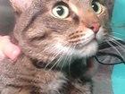 Фотография в Потерянные и Найденные Найденные Найден кот, камышовый окрас на улице Посадской, в Екатеринбурге 0