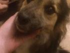 Foto в   В районе сортировки найден молодой пес. Дворняга. в Екатеринбурге 0