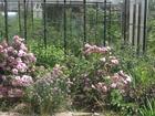 Изображение в Недвижимость Сады Продам сад в СНТ Солнышко около пос. Красный в Екатеринбурге 430000