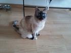 Просмотреть фотографию Отдам даром - приму в дар Отдам даром кошку 38953590 в Екатеринбурге