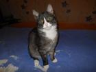 Новое фото Отдам даром - приму в дар Отдам в хорошие руки котика (мальчика) даром 66226517 в Екатеринбурге