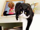 Скачать фотографию  Симоняша, радость наша, Талантливая веселая кошка 3г, 67982984 в Екатеринбурге