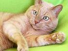 Уникальное фотографию  Мурзик, кот 10 лет, оставшийся без хозяйки 68755356 в Екатеринбурге
