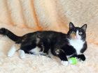 Новое foto  Муся Соловьева, кошка-черепашка 1г, , маленькая и шустрая 68917773 в Екатеринбурге