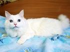 Просмотреть фотографию  Шикарный голубоглазый кот Салливан, 4г, 69184703 в Екатеринбурге