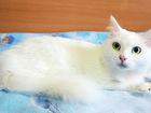 Уникальное изображение  Кошка СКАЛЛИ, Прекрасная Царевна-Несмеяна, 5 лет 69230274 в Екатеринбурге
