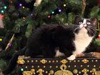 Уникальное фото  Пикколо, маленькая ч/б кошка 4г, , ищет дом 73212802 в Екатеринбурге