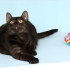 Кошка Дюна 1 год, Ласковая и общительная