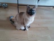 Отдам даром кошку Отдам в добрые руки кошку, зовут Тося. К лотку приучена, споко