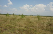 Продам земельный участок в Черной слободе