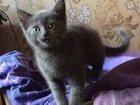 Фотография в Кошки и котята Продажа кошек и котят Продам котенка (4 мес), в связи переездом в Ельце 360