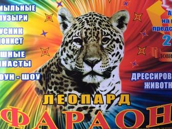 Смотреть изображение Цирк Впервые в г, Елец шапито Фараон 38893838 в Ельце