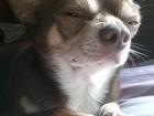 Скачать бесплатно foto Вязка собак Марс ищет мать будущих детей! 38684418 в Гатчине