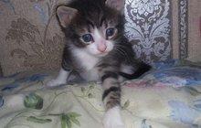 Отдам котят (1 месяц)