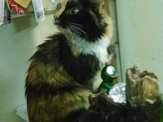 Свежее foto Отдам даром - приму в дар Помогите обрести дом 34475297 в Гатчине