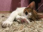 Уникальное изображение Вязка Вязка кошек 38317363 в Хабаровске