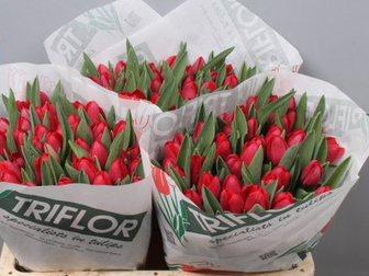 Смотреть изображение  Тюльпаны оптом Хабаровск прямая поставка из Голландии 34530093 в Хабаровске