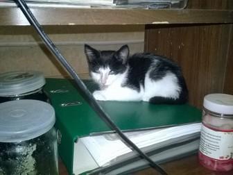 Смотреть изображение Отдам даром - приму в дар Отдам замурчательного котенка 38528768 в Хабаровске