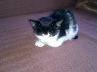 Уникальное фото Отдам даром - приму в дар Отдам замурчательного котенка 38528768 в Хабаровске