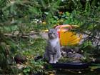 Новое фото Потерянные пропала кошка 38719977 в Щелково